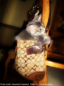 Kitty in a Coach